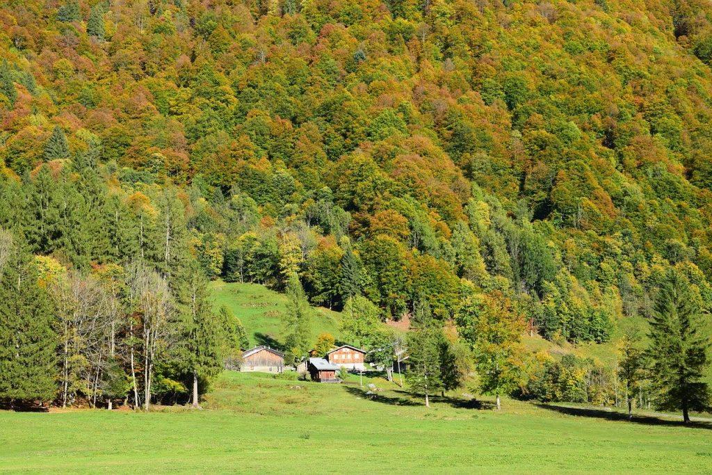 Foret en Haute Savoie