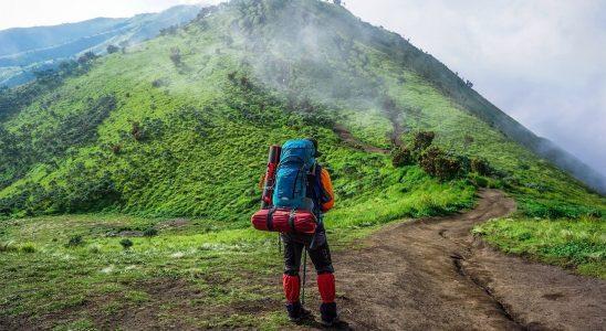 Aventure en haute forêt